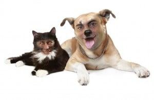 Gerry gato y Santi perro